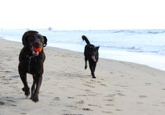 Plan a day out with your pup with our list of pet-friendly OC beaches and trails