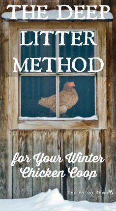 Using the deep litter method for your winter chicken coop is a great way to keep your chickens healthy and warm during the cold months. http://thepaleomama.com/2015/10/the-deep-litter-method-for-your-winter-chicken-coop/