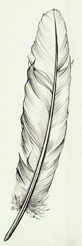 Feather {tattoo idea} | http://best-wonderful-tatoos.blogspot.com