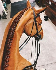 Likes, 132 Comments - Caroline Ratigan ( - DIY Fashion Pictures Horse Photos, Horse Pictures, Pretty Horses, Beautiful Horses, Beautiful Braids, Dressage, Horse Hair Braiding, Horse Mane Braids, Mane Hair