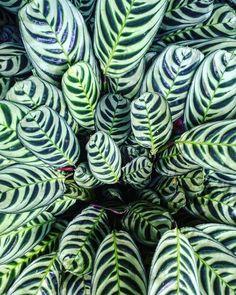 bold leaves (Justina Blakeney)