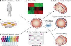 Human-Organoid Models: Accomplishments to Salvage Test-Animals