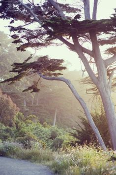 Land's End, San Francisco via beautifully, suddenly