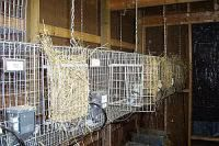 Good info on constructing cages. Small pix.  After our first set of cages, we built another set with double side walls and a 3-inch gap between compartments to eliminate biting each other through the wire. I like this design a lot and use the gap for a hay rack.