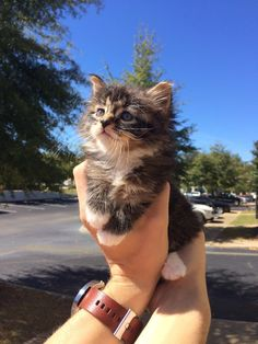 Meet Leo, the unbelievably fluffy kitten we found!