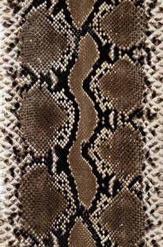 Find Snake Skin Texture stock images and royalty free photos in HD. Patterns In Nature, Textures Patterns, Print Patterns, Animal Print Wallpaper, Cute Patterns Wallpaper, Snake Wallpaper, Cute Wallpapers, Wallpaper Backgrounds, Iphone Wallpaper