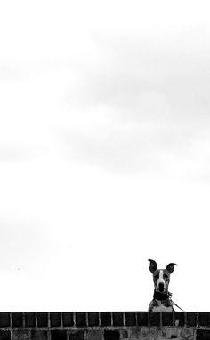 Black and white minimalist photography Boo by Hayley Marlow Photo D Art, Minimalist Photography, Whippets, Mundo Animal, Italian Greyhound, Animal Photography, Photography Blogs, Iphone Photography, Urban Photography