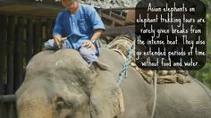 Abused for profit. Secrets Behind Thailand's Elephant Tourism. #elephantride
