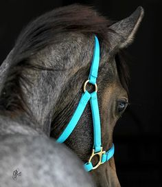 Pretty foal in turquoise halter //This looks like my Mini colt, Rocket Man!! @LaurenStine