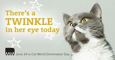 Did you know it's Cat World Domination Day!  :)