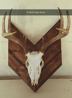 Boiled treated and spray painted the deer skull. Torched the wood varnished it and wiped the varnish off with paper towel right after. Screwed three boards to the back to hold everything together. Antler Crafts, Antler Art, Deer Decor, Deer Horns Decor, Deer Hunting Decor, Hunting Gear, Antler Mount, European Mount, Deer Mounts