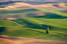 Photo Waving Wheat Fields by Ray Green on 500px