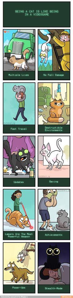 Cat life / iFunny :)