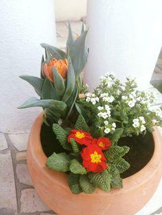 #Kraków #wiosna #ogród #tulipan #bashotel #prymulka #flowers Plants, Garden, Spring
