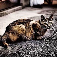 """@shoji_ogawa_unlimited's photo: """"#shinsekai #cat"""""""