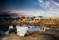 【野生動物 Wildlife】 セレンゲティ | ナショナルジオグラフィック日本版サイト
