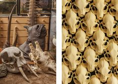 Curiosity and Eccenticity in Oskar Proctor's Photos from Viktor Wynd's Cabinet of Wonders. skulls