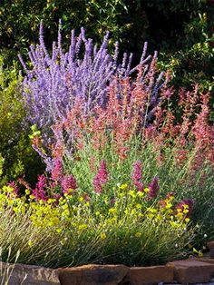 Our Western Drought Tolerant Gardens Where would we be without Russian sage & Sunset Hyssop