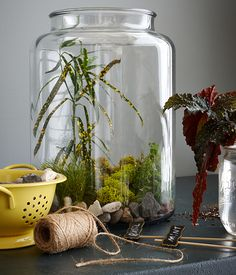 Use a large kitchen canister to set the scene for a lush terrarium.