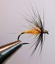 Will be good for the Usk