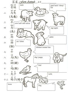 Hua Hua Fun Language Class教學三百六十度