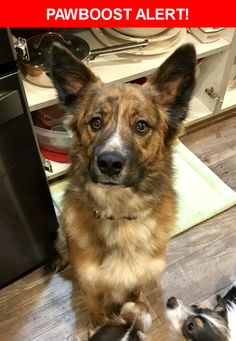 Is this your lost pet? Found in Green River, WY 82935. Please spread the word so we can find the owner!    Nearest Address: Near Riverview Cemetery Rd & E 4th
