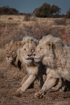 https://flic.kr/p/fZPZkQ   The Pride   A mission. A goal. The three boys knew something was going on, running in unison together.