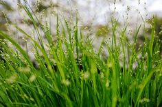 Grasses that catch the light | The Times