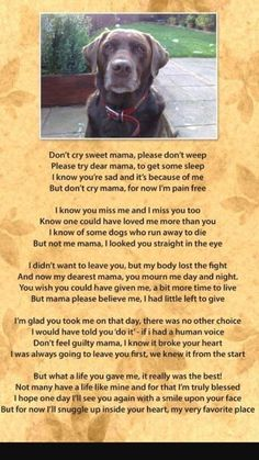 Losing A Dog Quotes, Dog Quotes Sad, Loss Quotes, Pet Loss Grief, Dog Poems, Chelsea, Puppy Drawing, Husky Mix