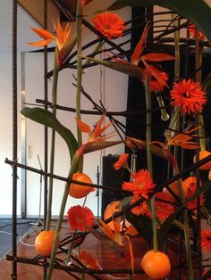 Ny Giv Plants, Plant, Planets