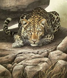 Animal Drawings A Out Of The Shadows, Fuz-Caforio, South African Wildlife Paintings, Wildlife Art, Animal Paintings, Animal Drawings, Drawing Animals, Big Cats Art, Cat Art, Beautiful Cats, Animals Beautiful