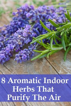 8 Aromatic Indoor Herbs That Purify The Air