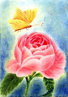 Waldorf ~ 5th grade ~ Botany ~ Rose with Butterfly ~ main lesson book