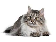 Výsledok vyhľadávania obrázkov pre dopyt pekná mačka