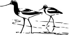 Vector line art drawing of an Avocet by Bob Hines for the US Fish and Wildlife Service. Free Pictures, Free Images, Sandpiper Bird, Shorebirds, Stories For Kids, Line Drawing, High Quality Images, Line Art, Vector Art