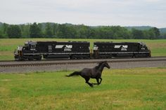 Norfolk Southern SD40E's # 6331 & 6330 run lite as a thoroughbred runs in stride along side at Enon Valley, PA