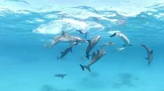 Dive With Dolphins - 360 Video VR https://www.youtube.com/watch?v=Eq27Zc28J4o&t=4s