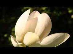 Séance audio de Sophrologie: Détente mentale & physique - YouTube