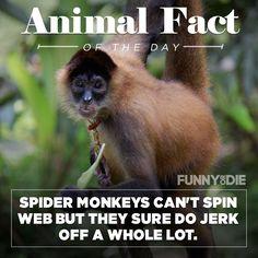 New funny post on funnyordie Funny Animal Facts, Funny Animals, Animal Quotes, Funny Posts, Humor, Funny Messages, Funny Animal, Hilarious Animals, Funny Animal Comics