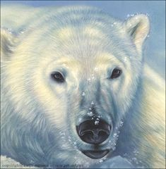Polar Bear Paintings | Polar Bear oil painting – Final scan
