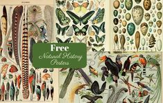 This is a fabulous free printable collection of natural history posters. More sp… This is a fabulous free printable collection of natural history posters. More specifically, birds, insects and butterfly posters by Adolphe Millot. Butterfly Images, Vintage Butterfly, Vintage Birds, Vintage Maps, Vintage Posters, Antique Maps, Vintage Bird Illustration, History Posters, Nature Posters