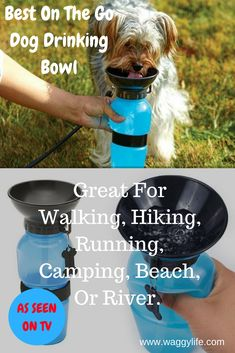 56 Best Dog Products Images