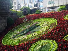 Floral Clock, City Photo, Roses, Bird, Animals, Flowers, Animales, Pink, Animaux