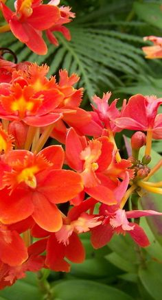 orchids and growing or planting Flower Garden Pictures, Beautiful Flowers Pictures, Unusual Flowers, Wonderful Flowers, Pretty Flowers, Orchid Plant Care, Orchid Plants, Red Orchids, Types Of Orchids