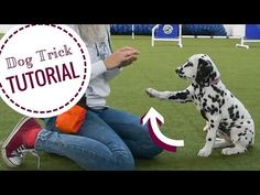 Dog Hacks, Your Dog, Give It To Me, Teaching, Dogs, Youtube, Doggies, Learning, Youtubers