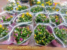Crisantemos para regalar en Agralia del Principado Garden Centre, Chrysanthemums