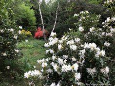 Varázslatos rododendronvirágzás a Jeli arborétumban | Mert utazni jó, utazni érdemes... Merida, Hungary, Plants, Plant, Planets