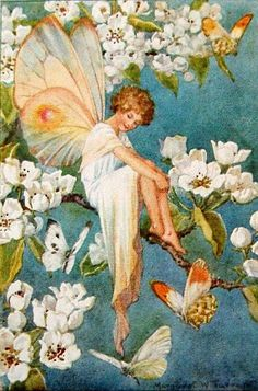 The Pear Blossom Fairy - Illustration by Margaret W. Tarrant