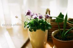 Fotos, a veces filmphotography | daytrip.photo