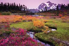 One of our BEST HIKES takes you here: Heather Meadows near Mount Baker. Photo by Earl Robicheaux